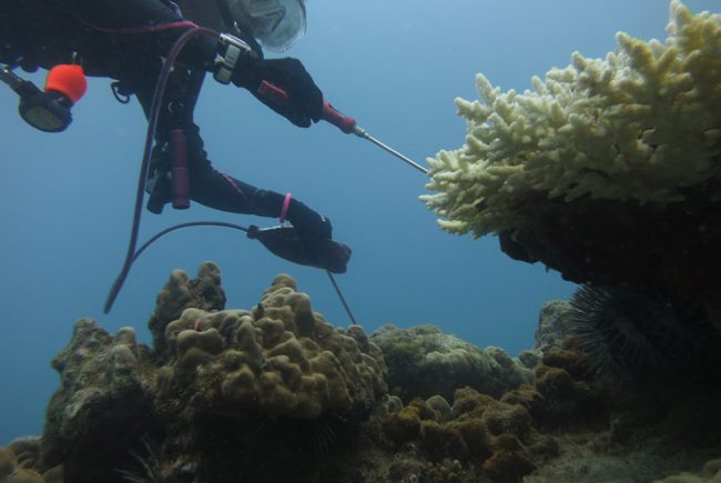 Awesome buoyancy is needed to inject the destructive COTs