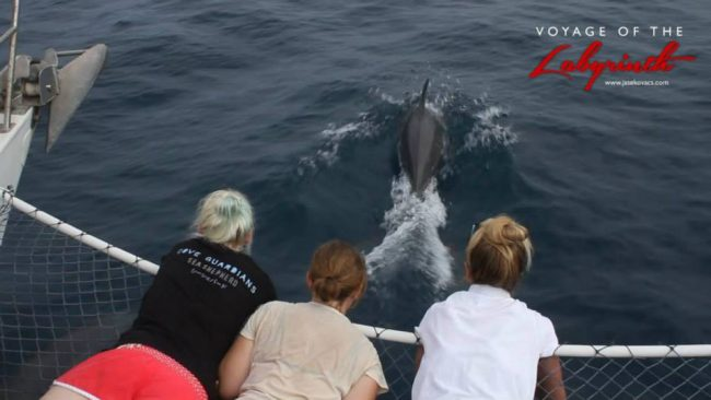 Dolphins spotted on the journey to Coral Island