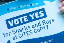 Protect Sharks and Rays